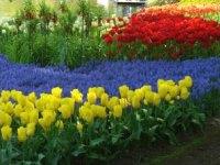 Цветочная психология
